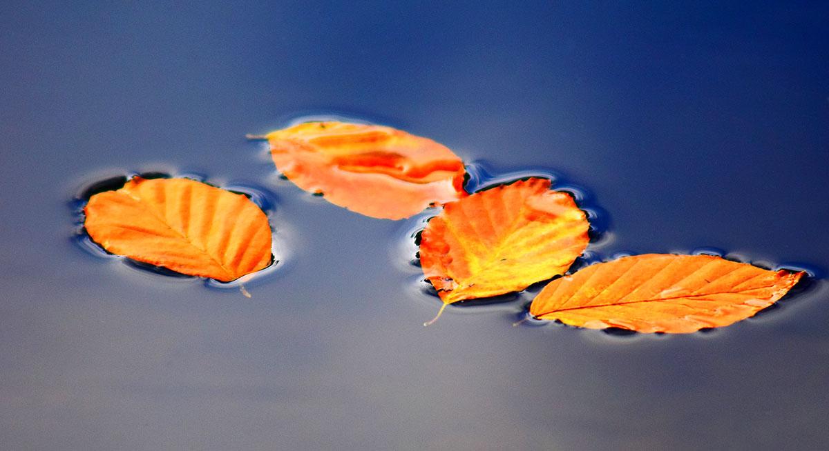 Fotografare foglie autunnali