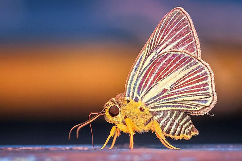 macro insetti